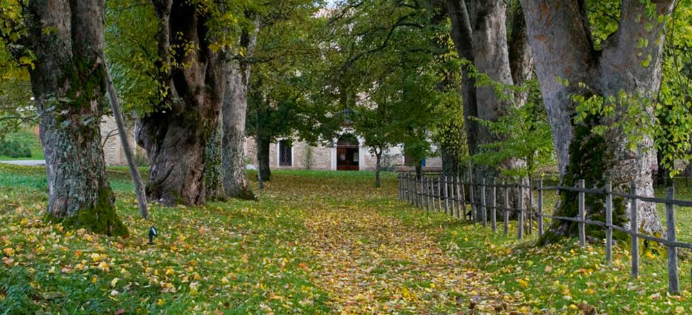 Dai funghi alle patate, l'autunno delle sagre a Camigliatello